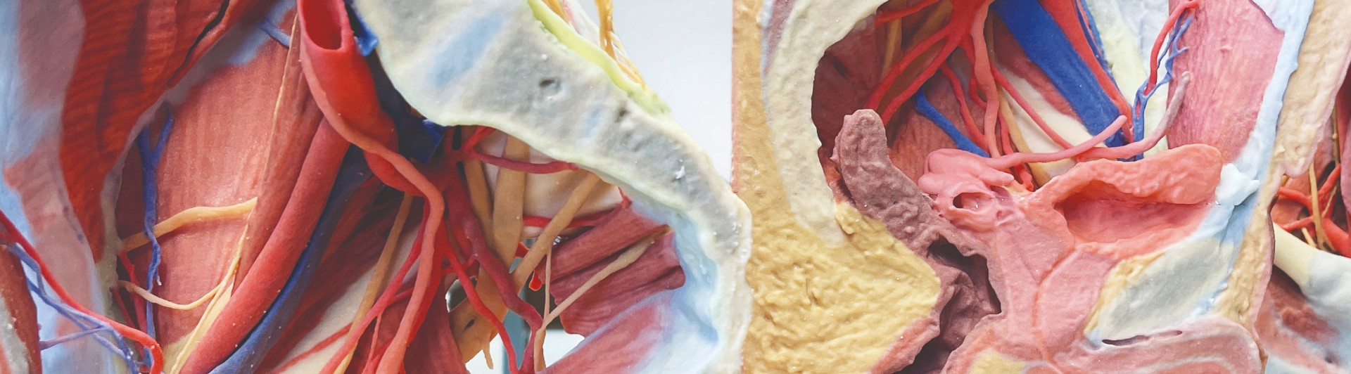 3D Anatomie Serie